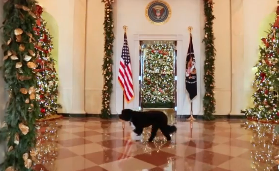 obama inspects the white house christmas decorations pets - Obama Christmas Decorations